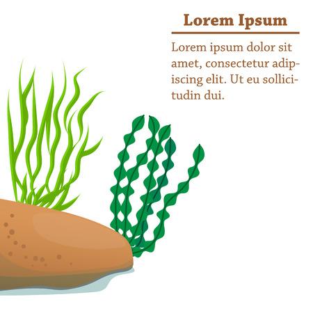 algae cartoon: Illustration of cartoon algae of different shapes Illustration