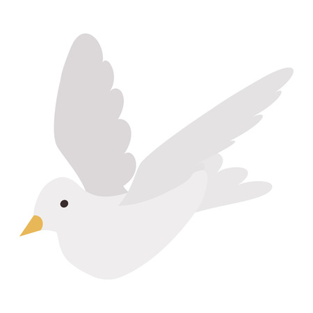 3d dove: White pigeon isometric 3d icon on a white background