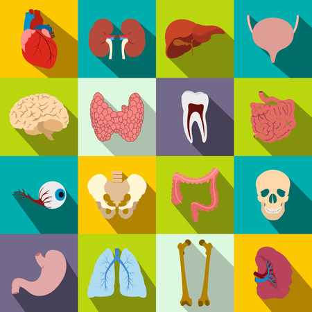 Internal organs flat icons set for web and mobile devices