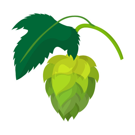 ferment: Branch of hops cartoon icon on a white background