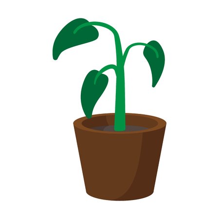 plant pot: House plant in pot cartoon icon on a white background
