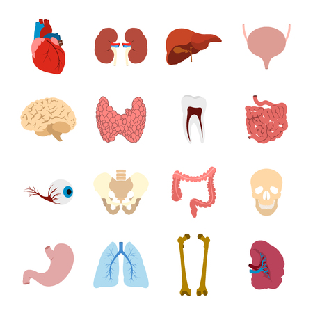 liver cells: Internal organs flat icons set for web and mobile devices