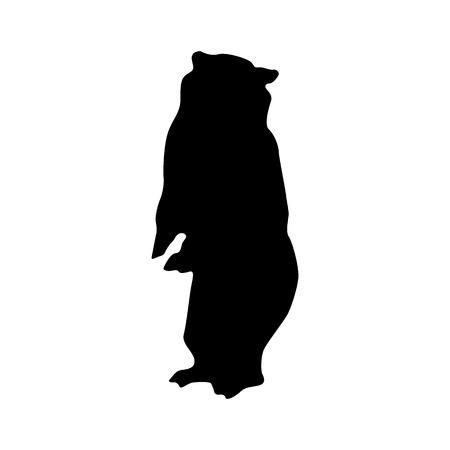 polar life: Bear black silhouette isolated on white background