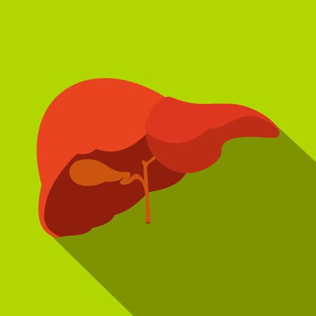 hepatic portal vein: Human liver flat icon with shadow on a green background