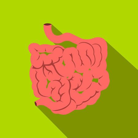 female large intestine: Small intestine flat icon with shadow on a green background Illustration