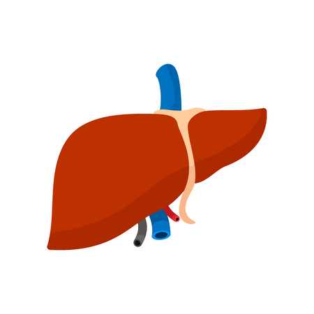 higado humano: icono de dibujos animados de hígado humano aislado en el fondo blanco