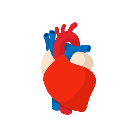heart organ: Human heart cartoon icon on a white background