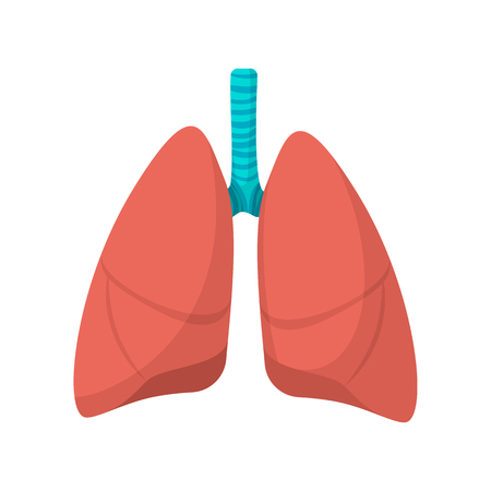Human lungs cartoon icon on a white background