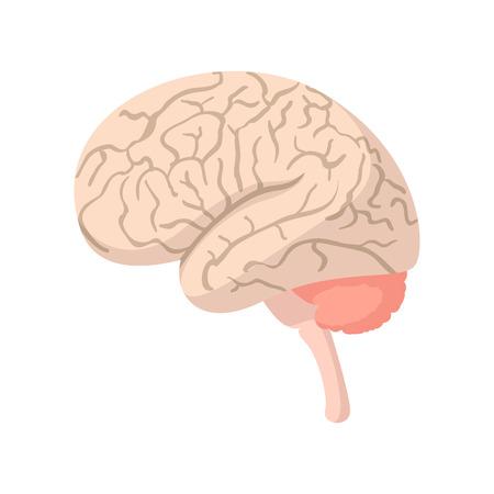 midbrain: Human brain cartoon icon on a white background Illustration