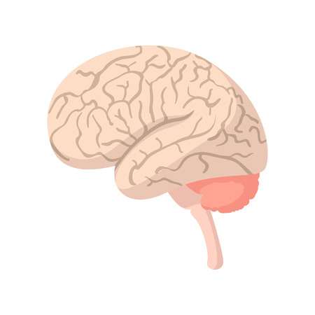 Human brain cartoon icon on a white background Illustration