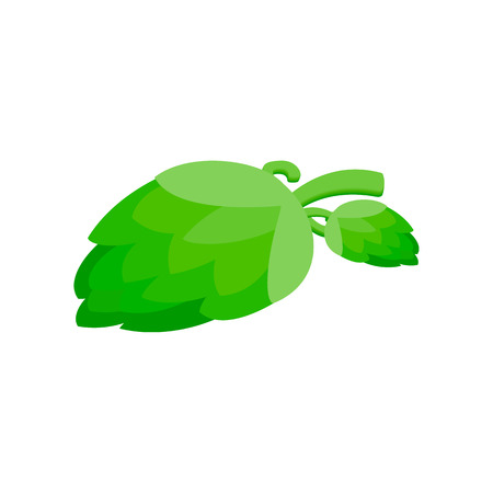 ferment: Branch of hops isometric 3d icon on a white background Illustration