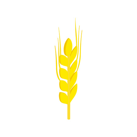 stalks: Two stalks of ripe barley isometric 3d icon on a white background