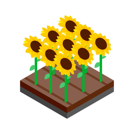 farm field: Sunflower field isometric 3d icon on a white background