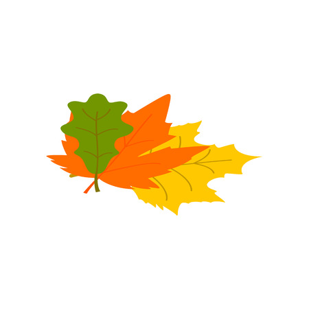 chokeberry: Autumn leaves isometric 3d icon on a white background