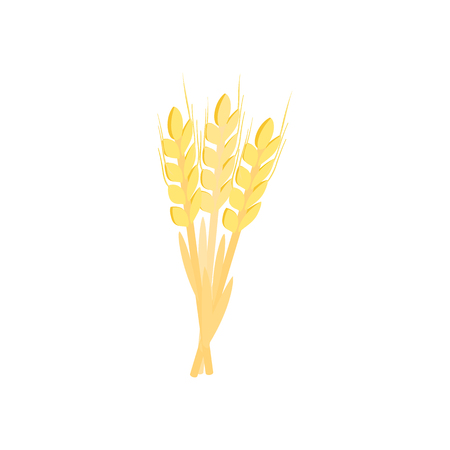 stalks: Three stalks of ripe barley isometric 3d icon on a white background Illustration