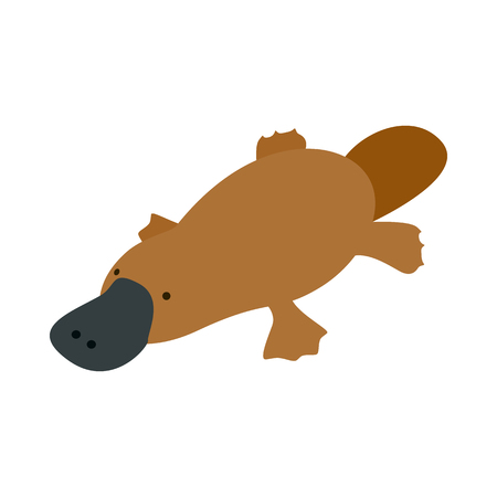 platypus: Australian platypus icon in isometric 3d style on a white  background