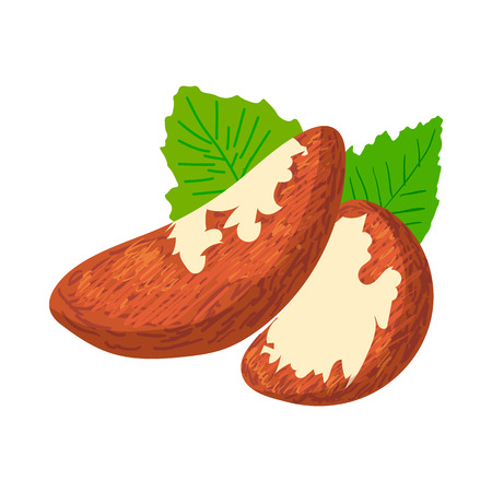 the kernel: Brazil nuts icon in cartoon style on a white background