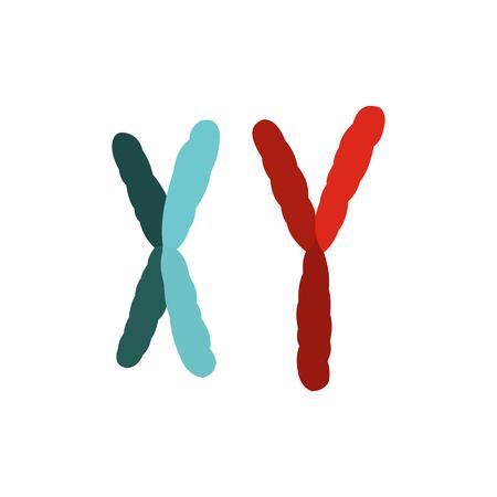 sex chromosomes: X and Y chromosome icon in flat style isolated on white background Illustration