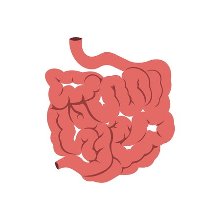small intestine: Small intestine icon in flat style isolated on white background Illustration