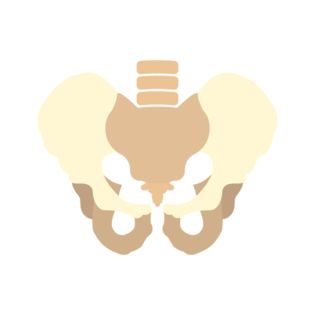 substructure: Human pelvis icon in flat style isolated on white background Illustration