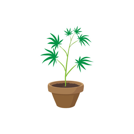 seedlings: Cannabis plant in a pot icon in cartoon style on a white background