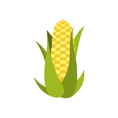 corn on the cob: Corn cob icon in flat style isolated on white background