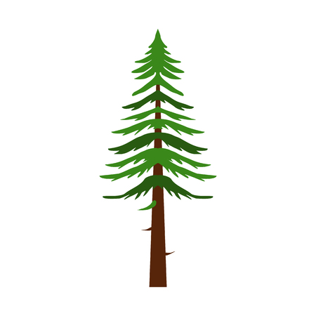 Canadian fir icon in flat style isolated on white background