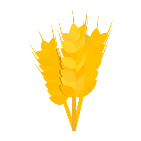 stalks: Three stalks of ripe barley icon in isometric 3d style on a white background