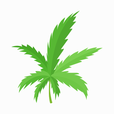 canabis: Marijuana leaf icon in cartoon style on a white background