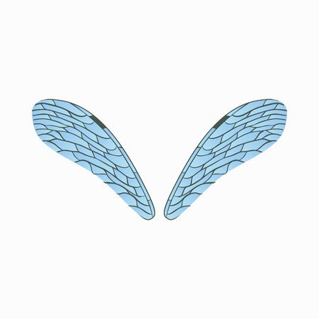 dragonfly wings: Realistic dragonfly wings icon in cartoon style isolated on white background Illustration