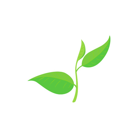 green tea leaf: Green tea leaf icon in cartoon style on a white background
