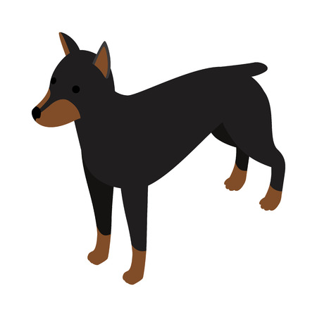 watchdog: Doberman dog icon in isometric 3d style isolated on white background. Animals symbol