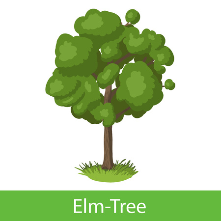 Elm-Tree cartoon icon. Single illustration on a white background