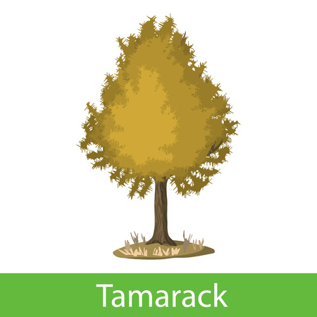 Tamarack cartoon tree