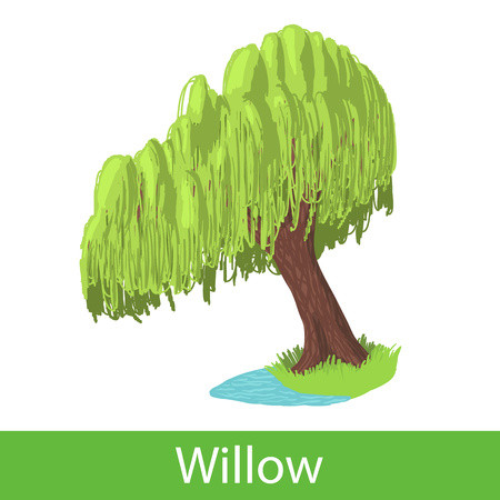 Willow cartoon tree. Single illustration on a white background