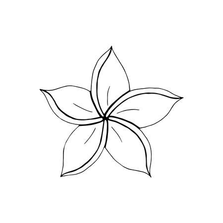 Contour engraving Plumeria bud. Black and white line art decoration of flower with leaves. Vector isolated clipart. Minimal monochrome hand drawing botanical design.