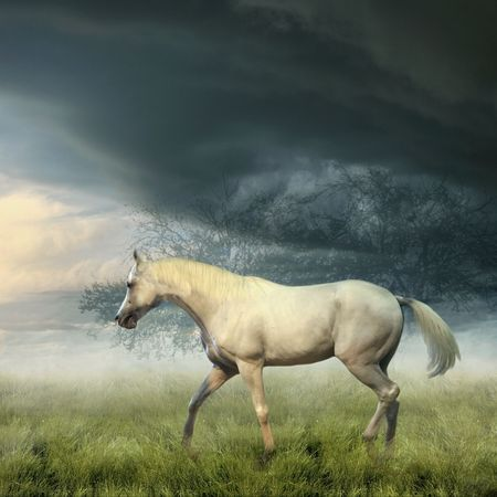 White horse in summer misty evening Stok Fotoğraf