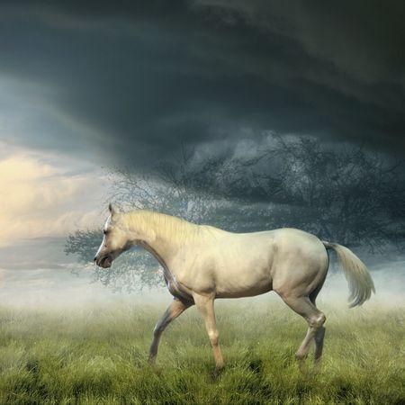 Witte paard op zomer misty avond