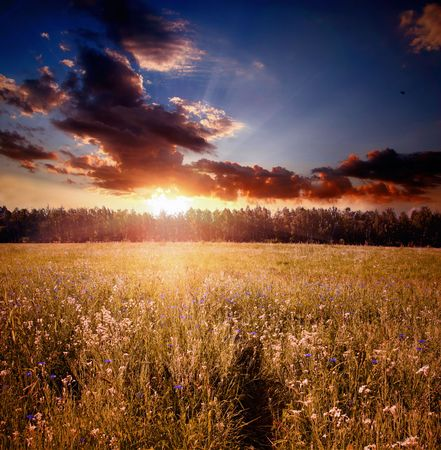 Landscape with field and sunset photo