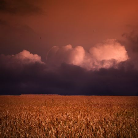 Sunset over wheat field and stack of hay in autumn Stock Photo - 4425677
