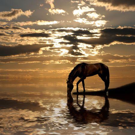夕暮れの湖で馬。