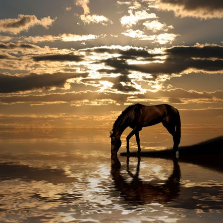 Het paard op meer op zonsondergang.