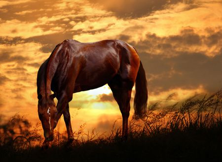 Grazing horse on sunset. Autumn evening