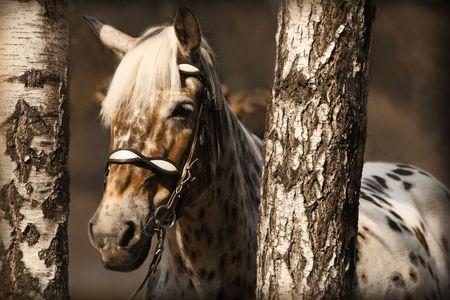 白樺に斑点を付けられた馬の肖像画。セピア
