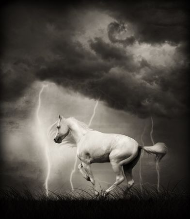 White horse under thunder sky with lightning Stock Photo