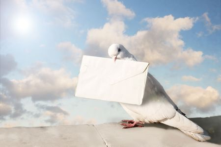 White Homing pigeon with letter. Color Stock Photo