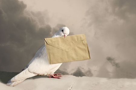 White Homing pigeon with letter. Sepia photo
