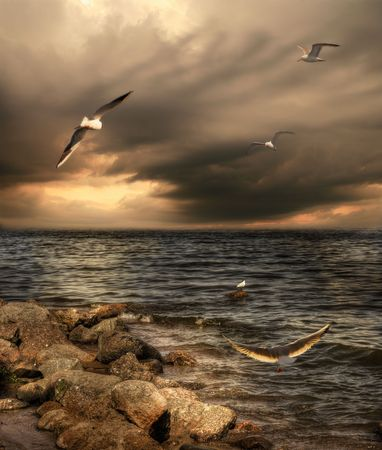 Sea landscape with dramatic sky and seagulls.