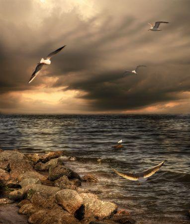 Zee landschap met dramatische hemel en meeuwen.