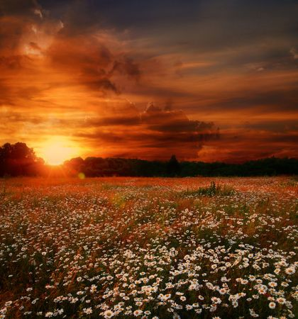 Landscape with daisies field and sunset Stock Photo - 5008168